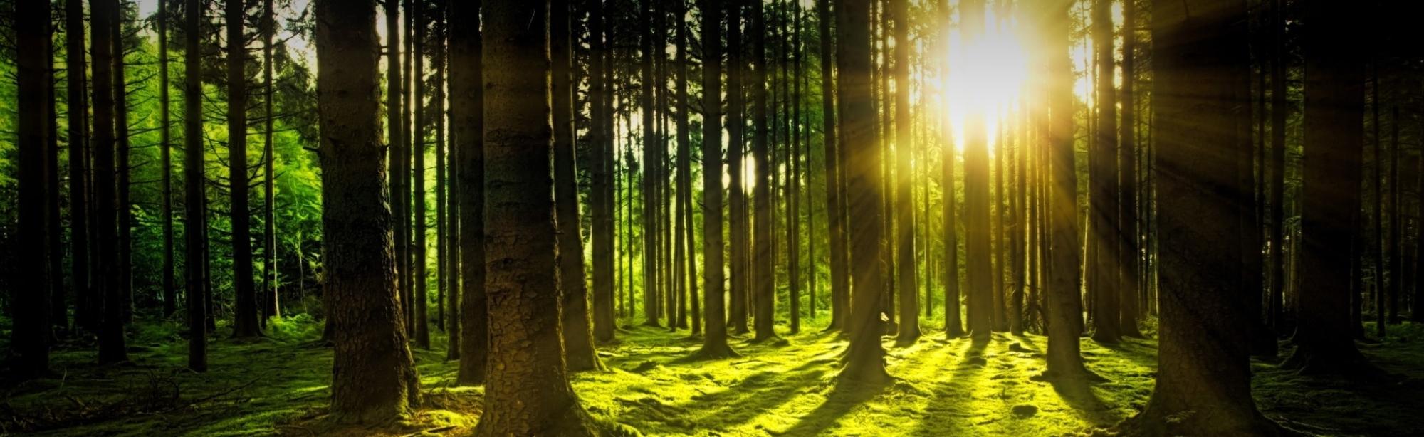 Brennstoffhandel Lehner - nachhaltige Forstwirtschaft